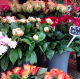 Les fleurs de Dubus