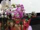 Remise des prix du concours des maisons fleuries 2015