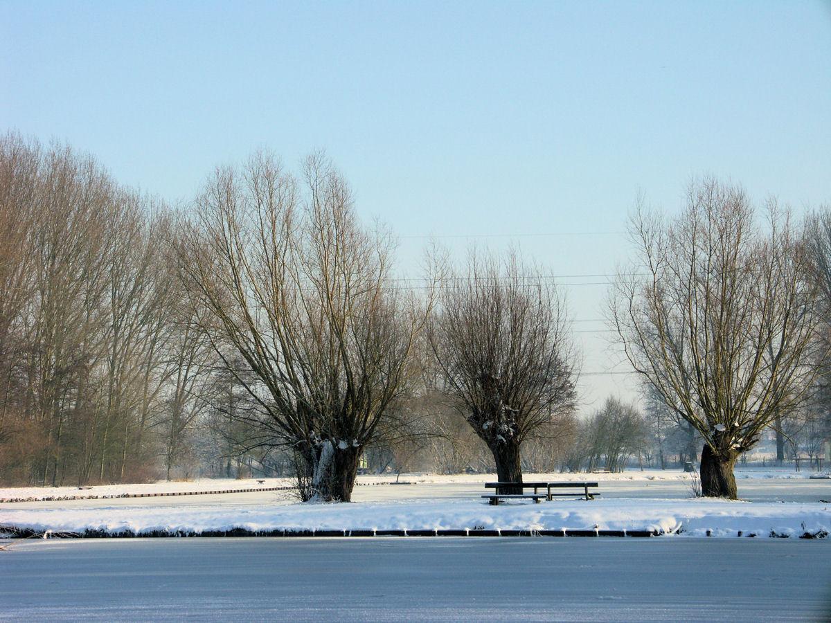 Willems sous la neige
