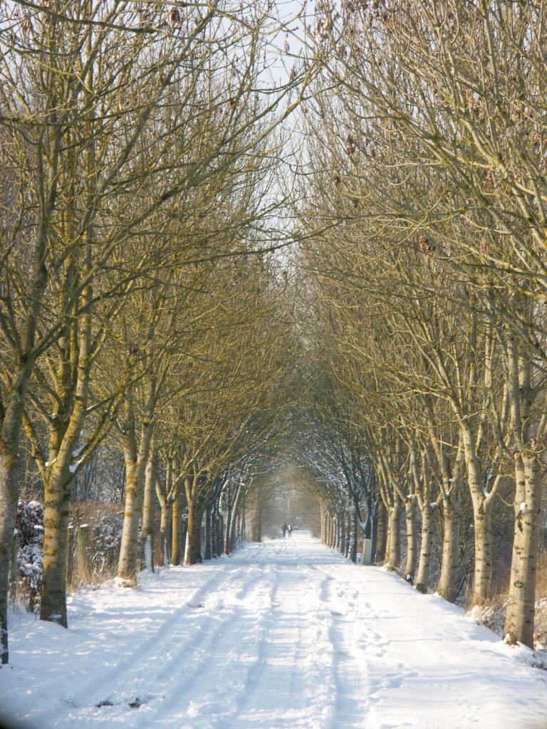 Chemin Rue de Chereng